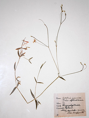 Antique Botanical, donated by Jim Drennen