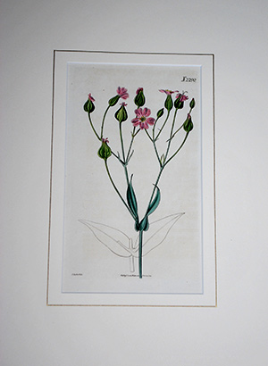 Framed Botanical Print, donated by Arceneaux Gallery